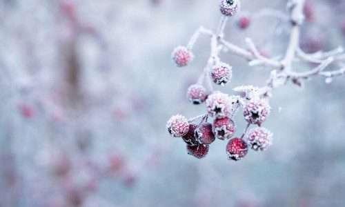 Tuin winterklaar maken of toch niet?