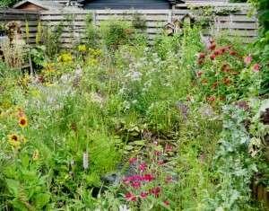 planten voor de cottage garden 1a