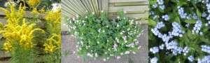 cottage garden 1c
