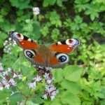 Marjolein vlindervriendelijk