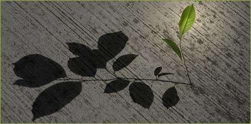 schaduwplanten lijst