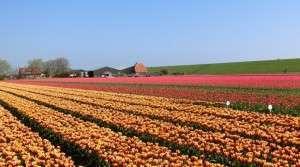 grondsoort voor bloembollen (11)