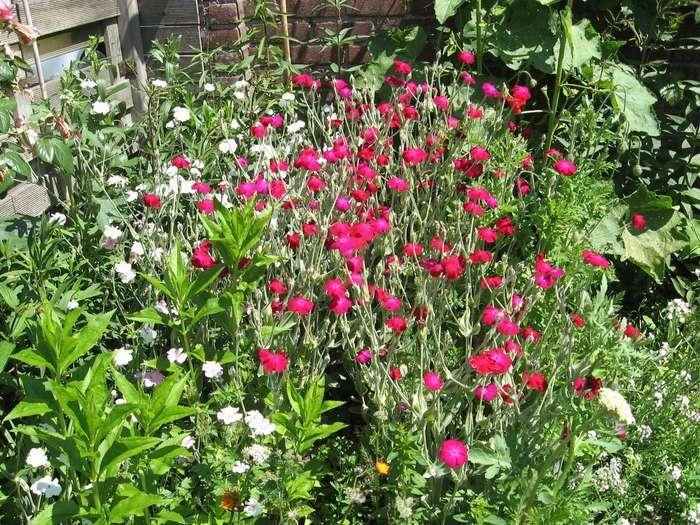 Makkelijke tuin met weinig onderhoud