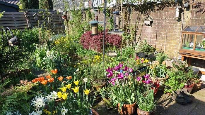 Cottagegarden met bloembollen